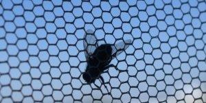 Insektenschutz montieren